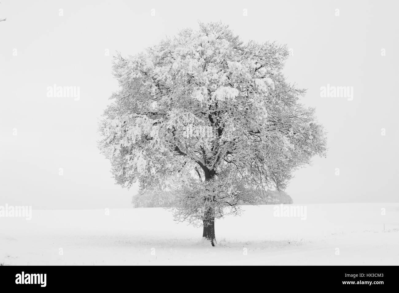 Schnee beladene Bäume in verschneiter Landschaft, Wooton St Lawrence, Hampshire. Stockbild