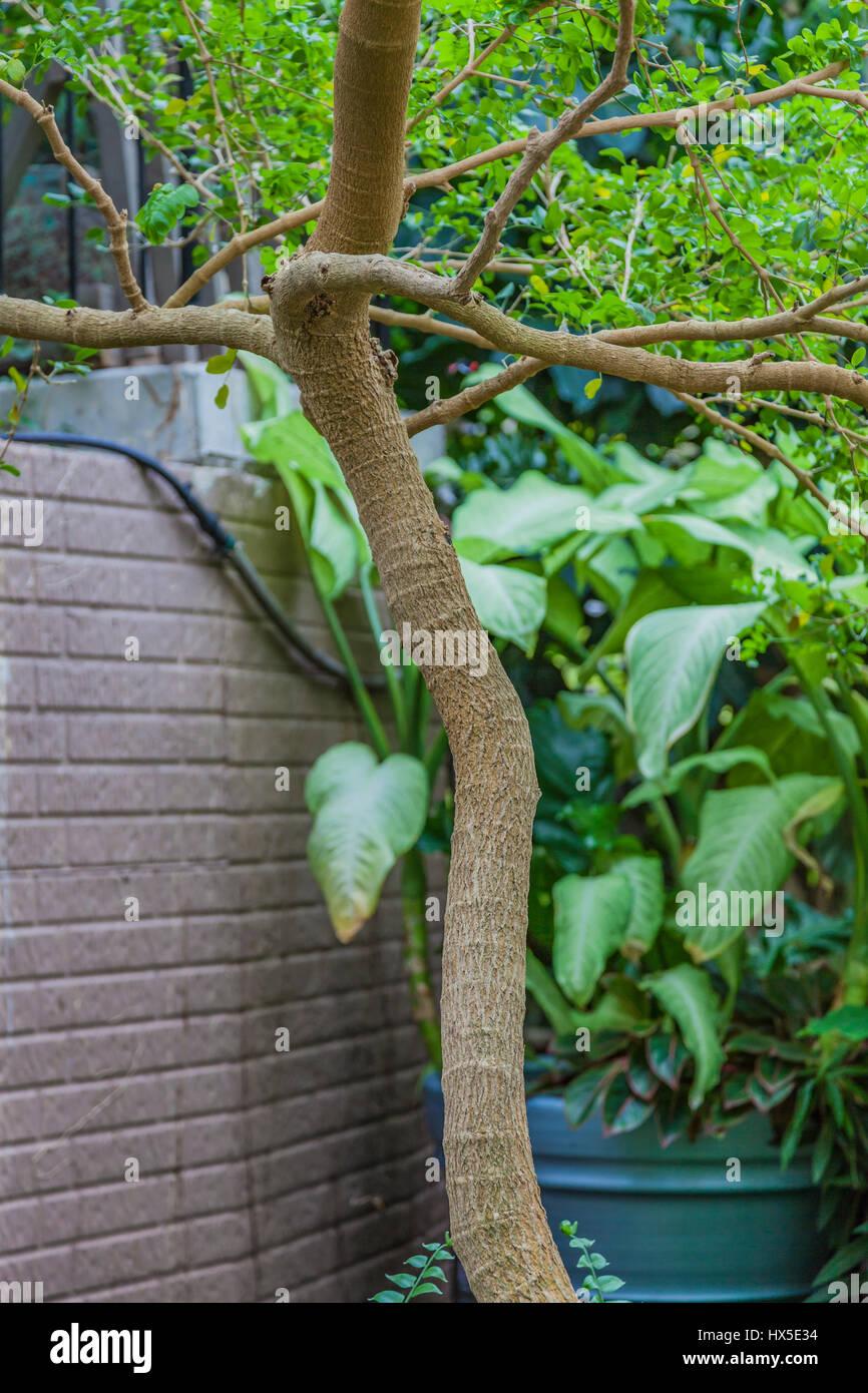 Sanctum stockfotos sanctum bilder alamy - Baum auf spanisch ...