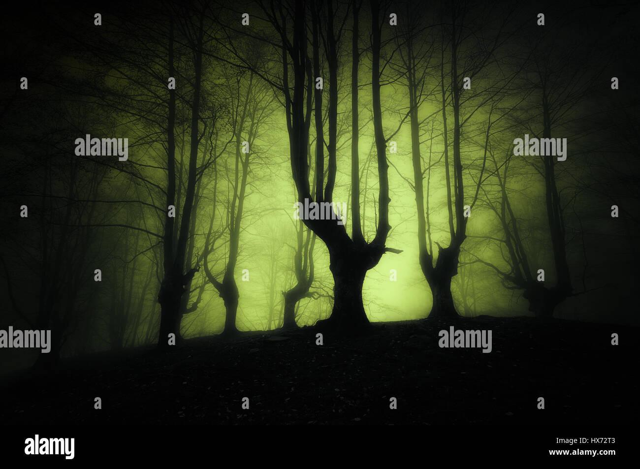 dunklen Wald mit furchterregende Bäume Stockbild
