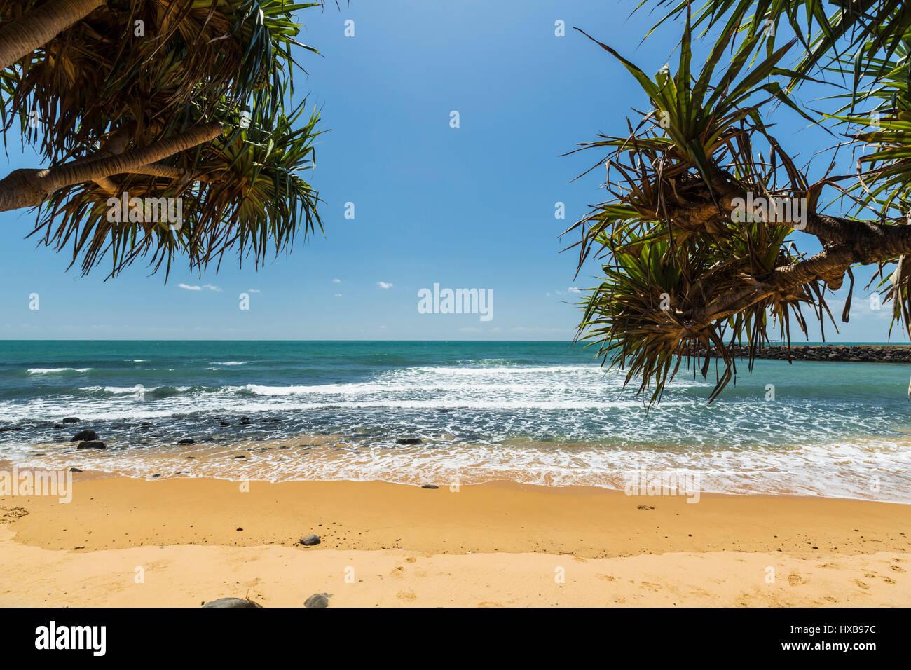 Blick durch Pandanus Palmen am Strand bei Bargara, Bundaberg, Queensland, Australia Stockbild