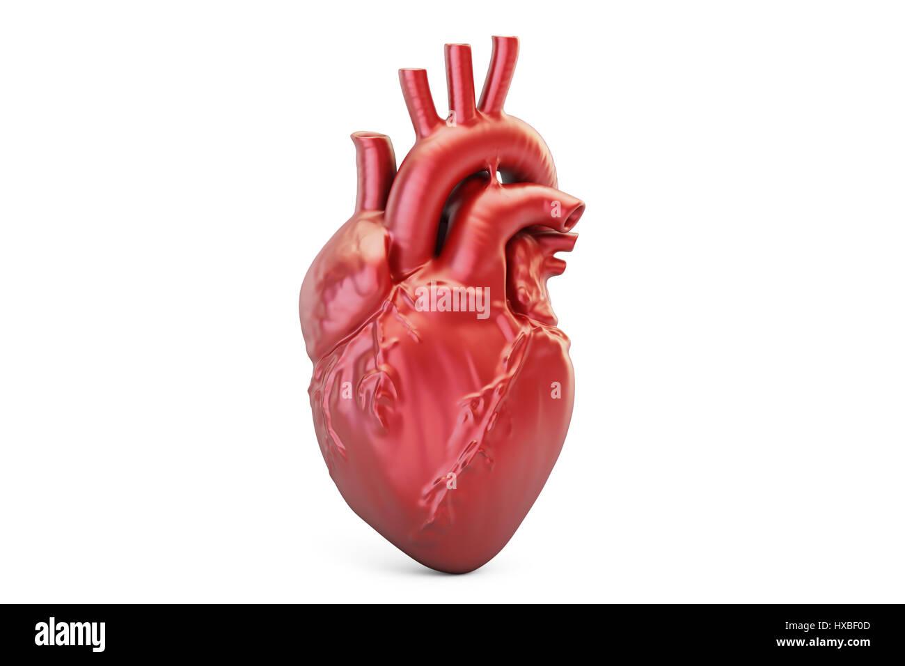 Menschliches Herz, 3D-Rendering isolierten auf weißen Hintergrund ...