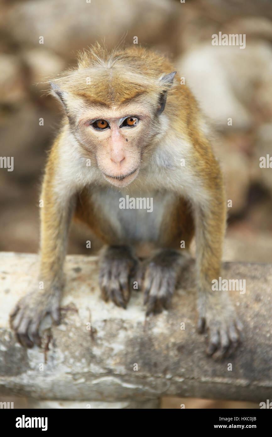 Ziemlich Süße Malvorlagen Von Affen Galerie ...