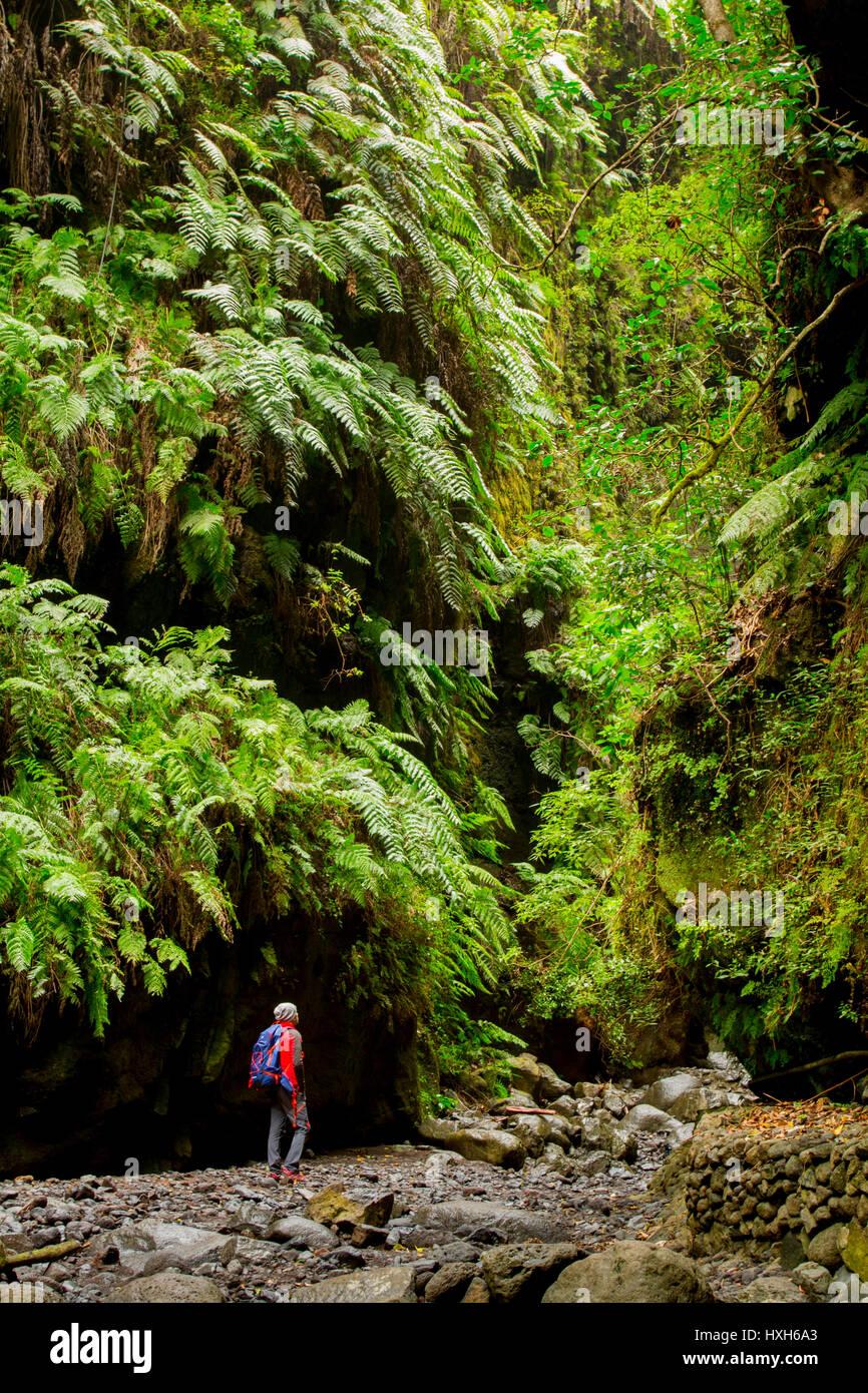 Los Tilos Wald, La Palma, Kanarische Inseln Stockbild