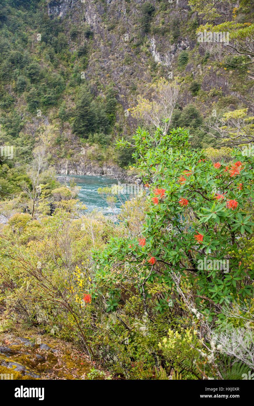 Vicente Prez Rosales Nationalpark befindet sich in Los Lagos Region, Provinz Llanquihue, Chile. Der westliche Eingang Stockbild