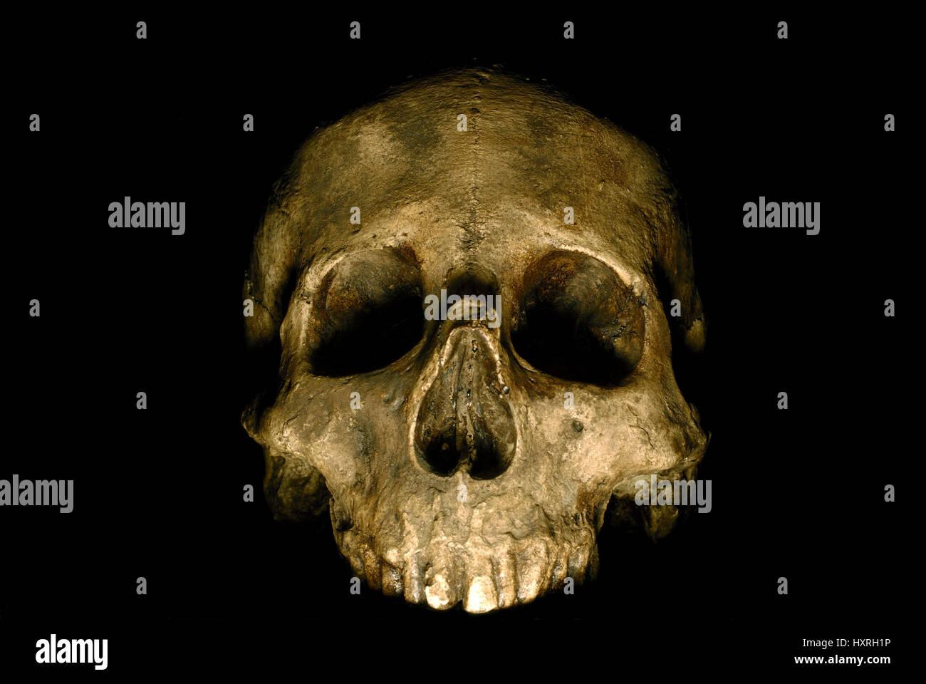 Tote Person Schädel, Tod, Totenkopf, Totenschädel, tödlich, Schädel, Skelett, menschlicher, Stockbild
