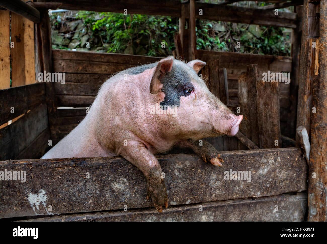 Erfreut Schwein Drahtzaun Pläne Fotos - Elektrische Schaltplan-Ideen ...
