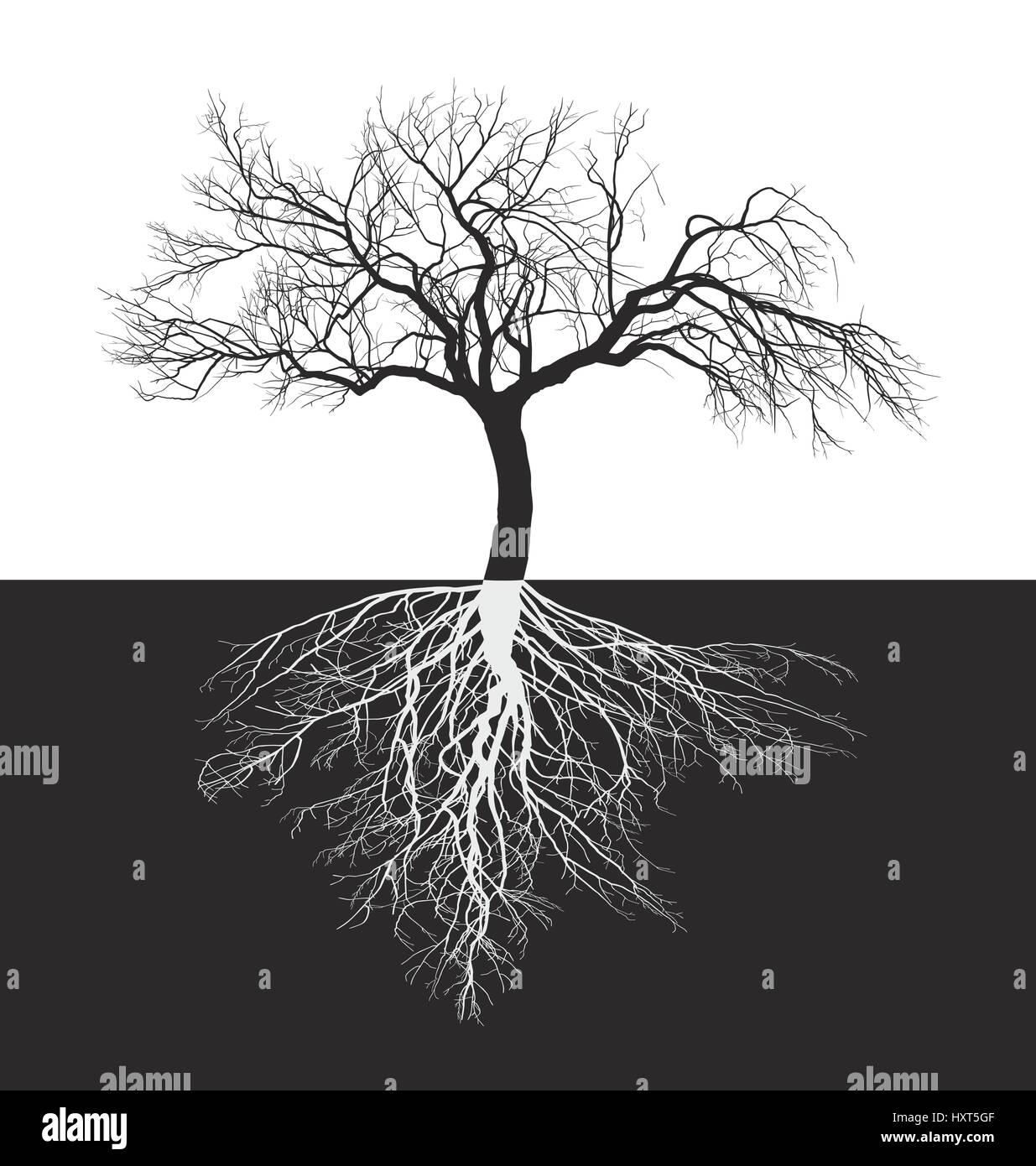 Wurzeln Apfelbaum