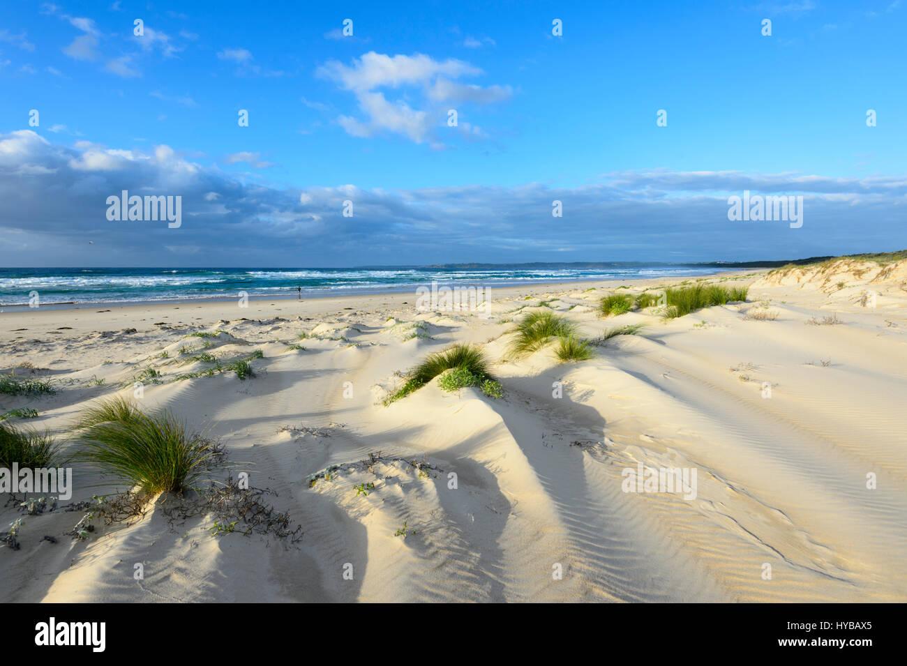 Malerische Sanddünen und Grasbüscheln am Conjola Strand, Shoalhaven, South Coast, New-South.Wales, NSW, Stockbild