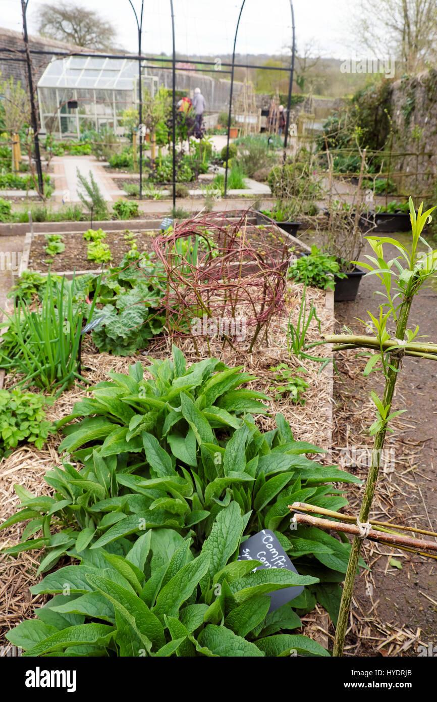 Pflanzen Fur Hochbeete Stockfotos Pflanzen Fur Hochbeete Bilder