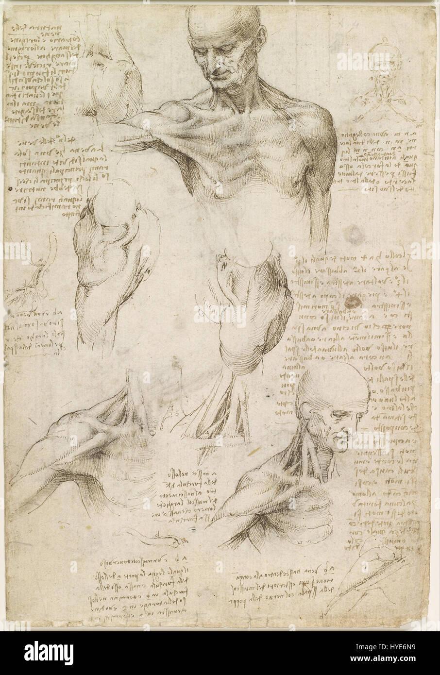 Leonardo da Vinci oberflächliche Anatomie der Schulter und Nacken ...