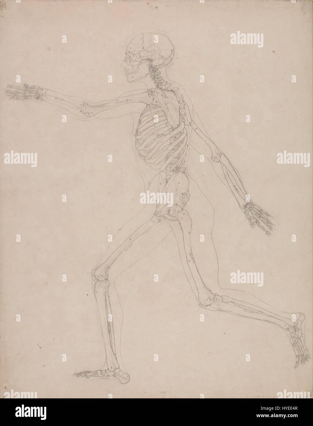 Anatomical Painting Stockfotos & Anatomical Painting Bilder - Seite ...