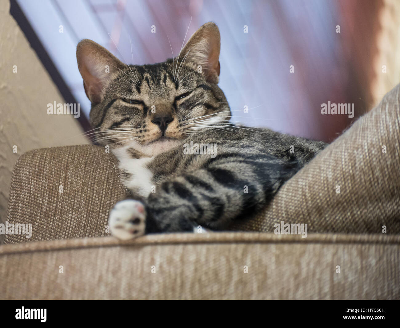 selbstgef llig katze von oben stockfoto bild 137424241 alamy. Black Bedroom Furniture Sets. Home Design Ideas