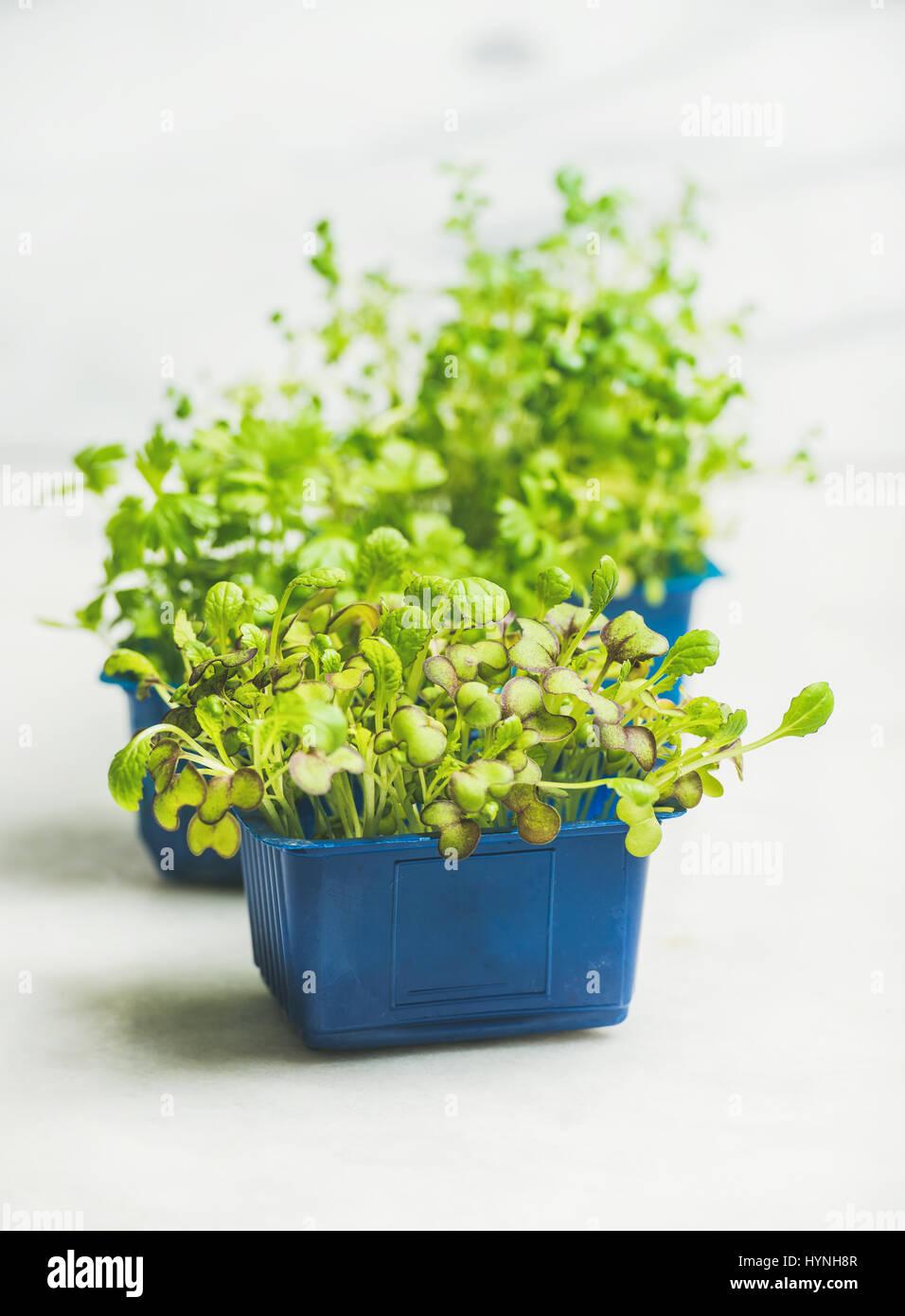 Frische Frühlingsluft grüne live Rettich Kress Sprossen, weißen Marmor Hintergrund Stockbild