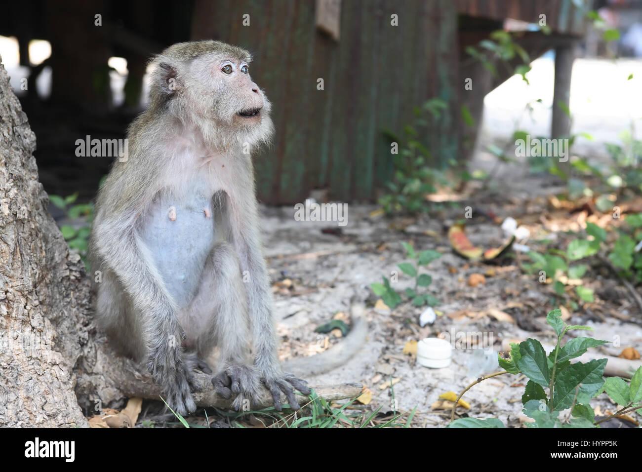 Groß Malvorlagen Affen Springen Bett Bilder ...
