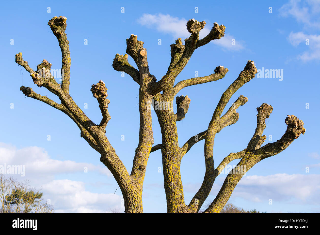 pruning stockfotos pruning bilder alamy. Black Bedroom Furniture Sets. Home Design Ideas