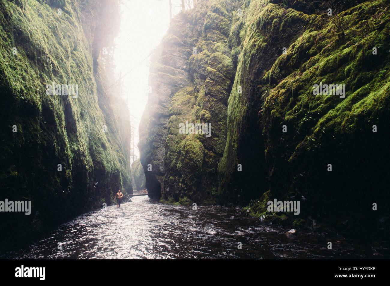 Oneonta Schlucht, Pacific Northwest, Oregon Stockbild
