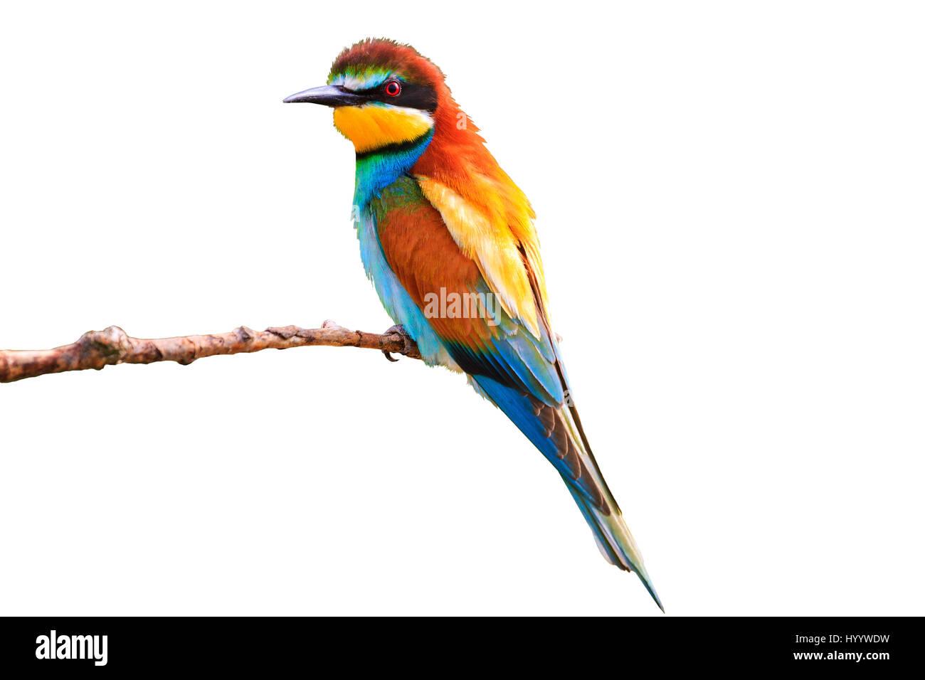 Nett Blaue Böse Vogel Färbung Seite Galerie - Entry Level Resume ...