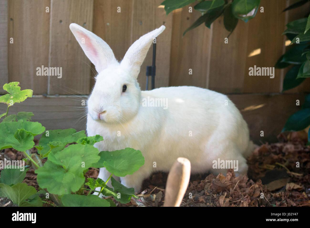 Kaninchen Im Garten Stockfoto Bild 137748135 Alamy