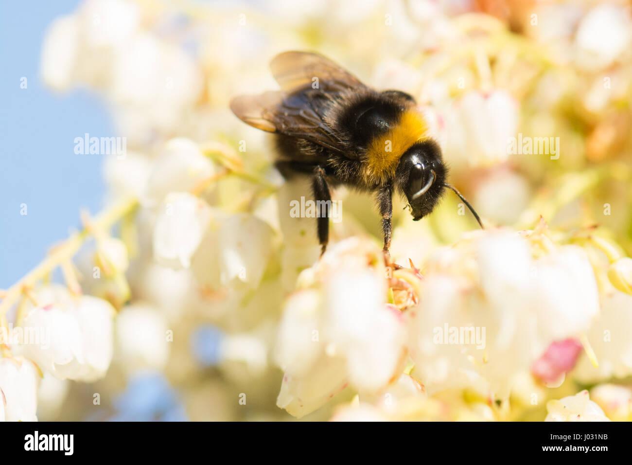 Early Spring Stockfotos & Early Spring Bilder - Alamy