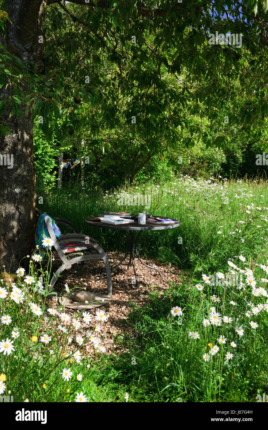 Bank und Tisch im Schatten eines Kirschbaumes, umgeben von einer blühenden Wiese an einem heißen sonnigen Stockbild