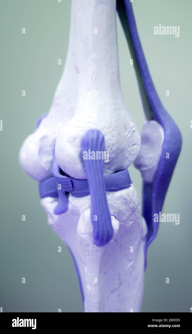 Großzügig Studie Knochen Anatomie Bilder - Menschliche Anatomie ...