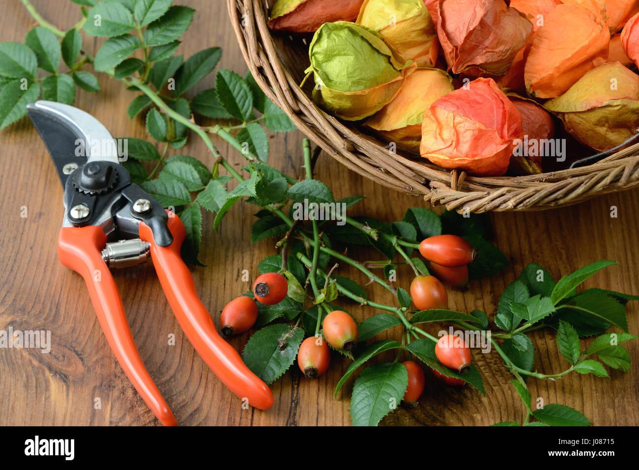 Herbst dekoration von hagebutten floristik stockfoto for Dekoration herbst