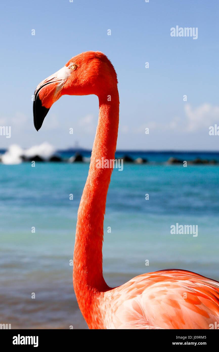 Die besten Strände von Aruba: Flamingo Strand des Renaissance Hotels Stockfoto