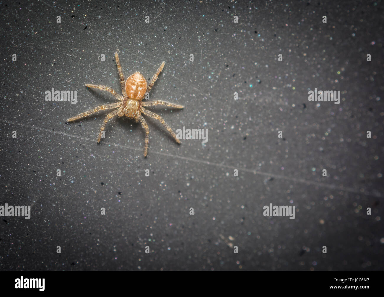 Spider Anatomy Stockfotos & Spider Anatomy Bilder - Alamy