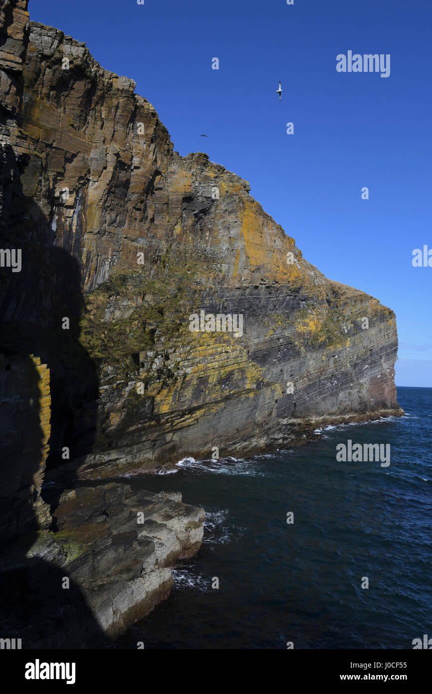 Whaligoe Schritte, steil, in der Nähe von Docht Fische Frauen Angeln; Caithness, Schottland; Klippen; Seevögel; Stockbild