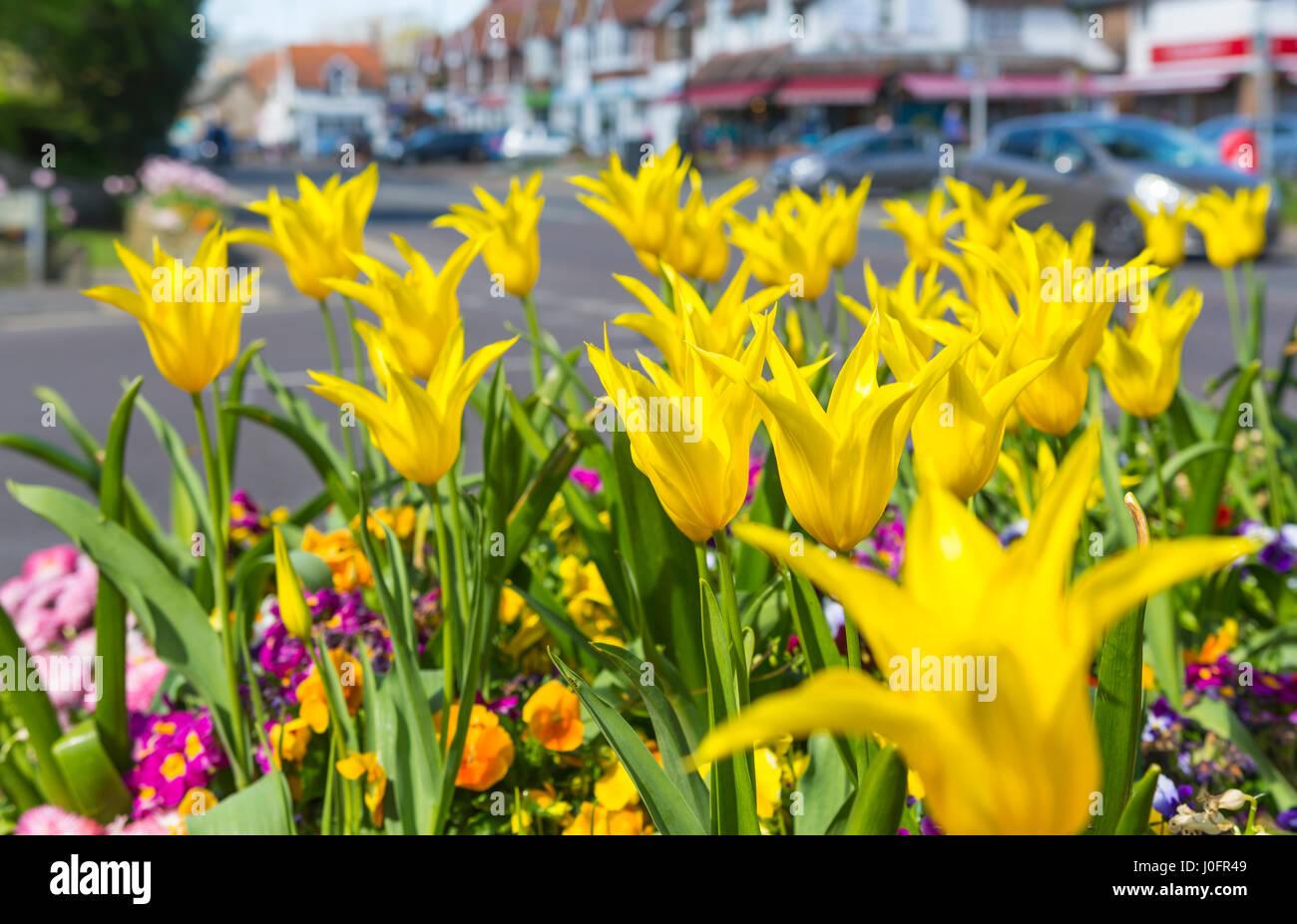Blumen Blumen Blumenbeete Betten Stockfotos & Blumen