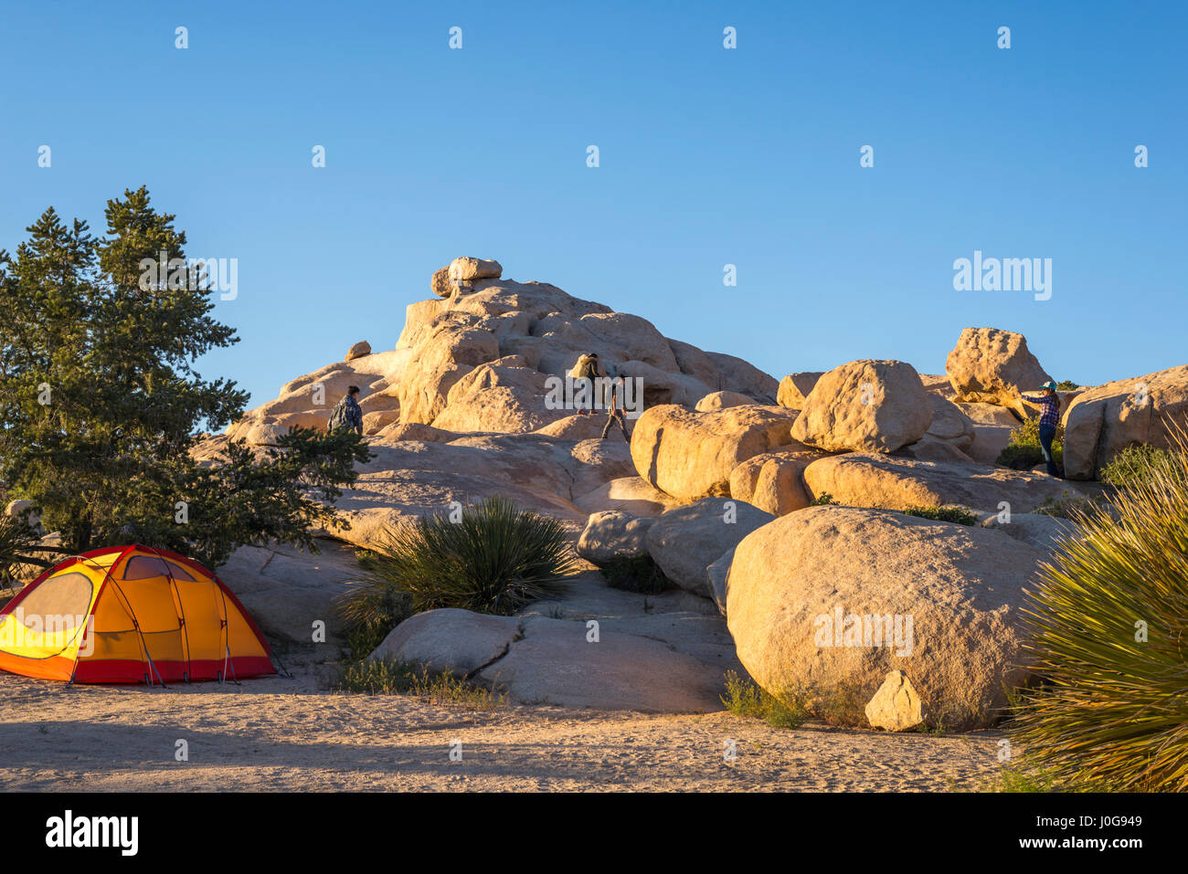 Camping Zelt am Campingplatz Bereich. Joshua Tree Nationalpark, Kalifornien, USA. Stockfoto