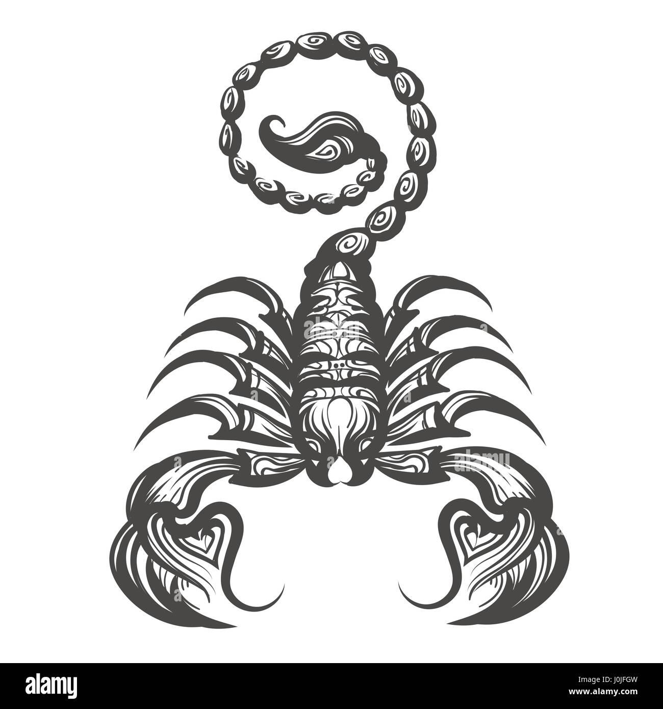 Scorpion In Gravur Stil Gezeichnet Vektor Illustration Vektor