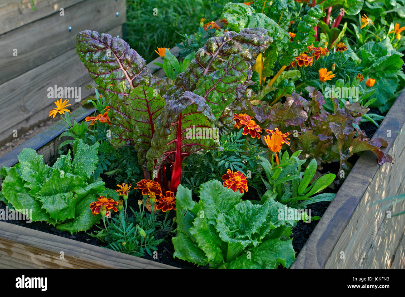 Ein Hochbeet Von Gemuse Und Blumen In Einem Stadtischen Garten