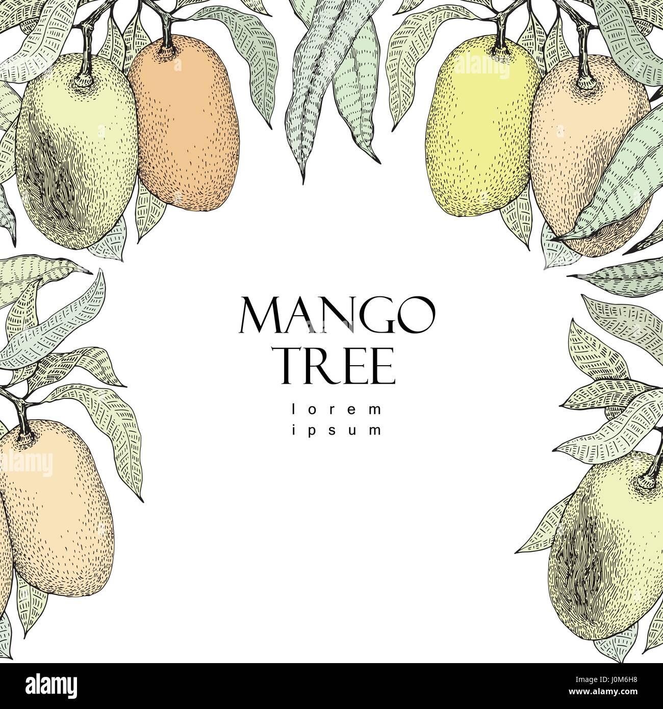 Mango-Baum-Vintage-Design-Vorlage. Botanische Mango-Frucht-Frame ...