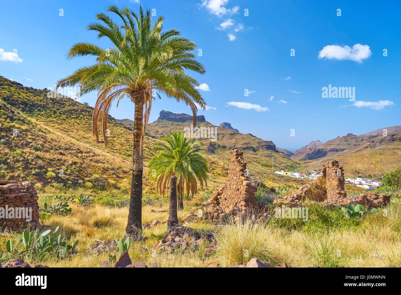 Kanarischer Landschaft mit Palmen, Gran Canaria, Kanarische Inseln, Spanien Stockfoto