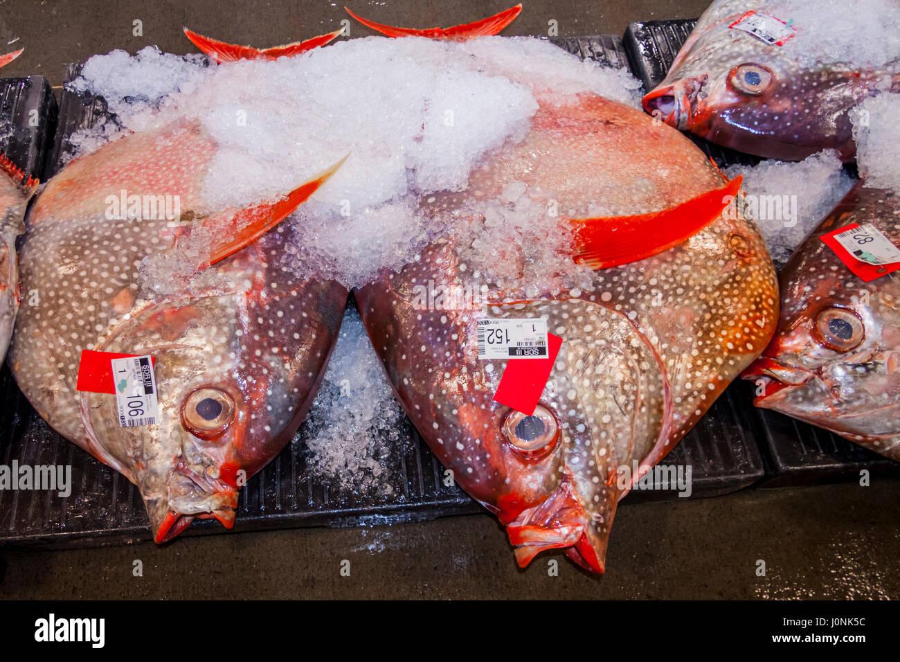 Moonfish bei Fischauktion, Lampris Guttatus, Hawaii, USA Stockfoto