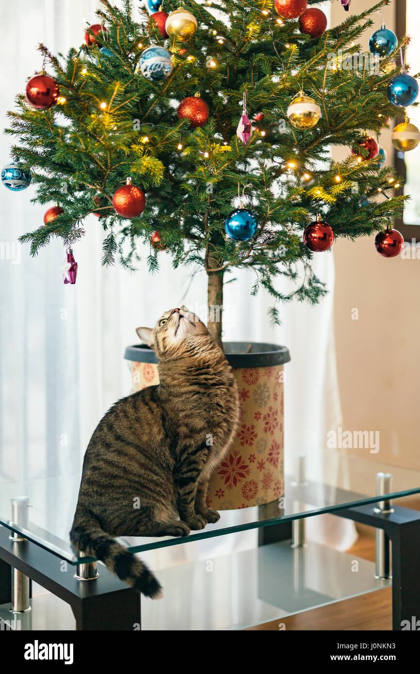 Die Katze Unter Dem Weihnachtsbaum Kleiner Baum In Einem Topf In