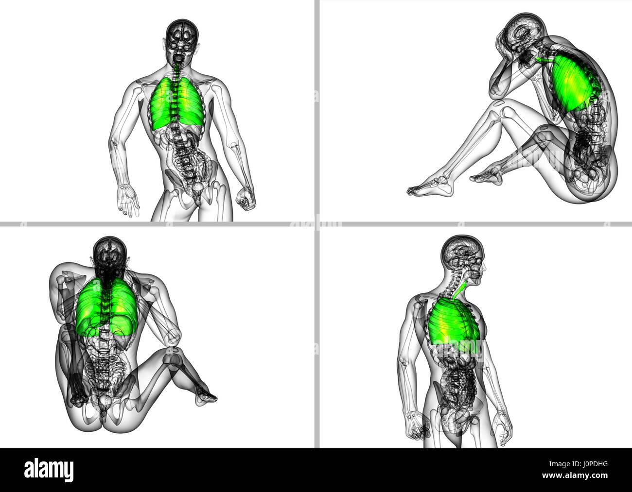 Nett Menschlichen Atemwege Anatomie Zeitgenössisch - Menschliche ...