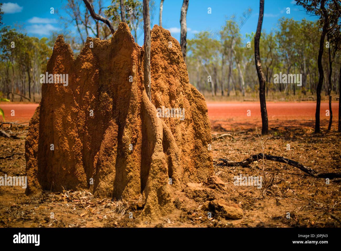 Ein 2 m hohes termite Damm durch eine unbefestigte Straße, Far North Queensland Stockbild