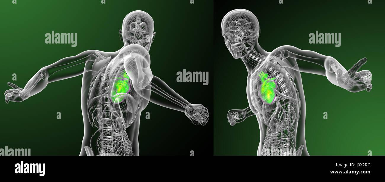 Nett 3d Anatomie Des Herzens Ideen - Menschliche Anatomie Bilder ...