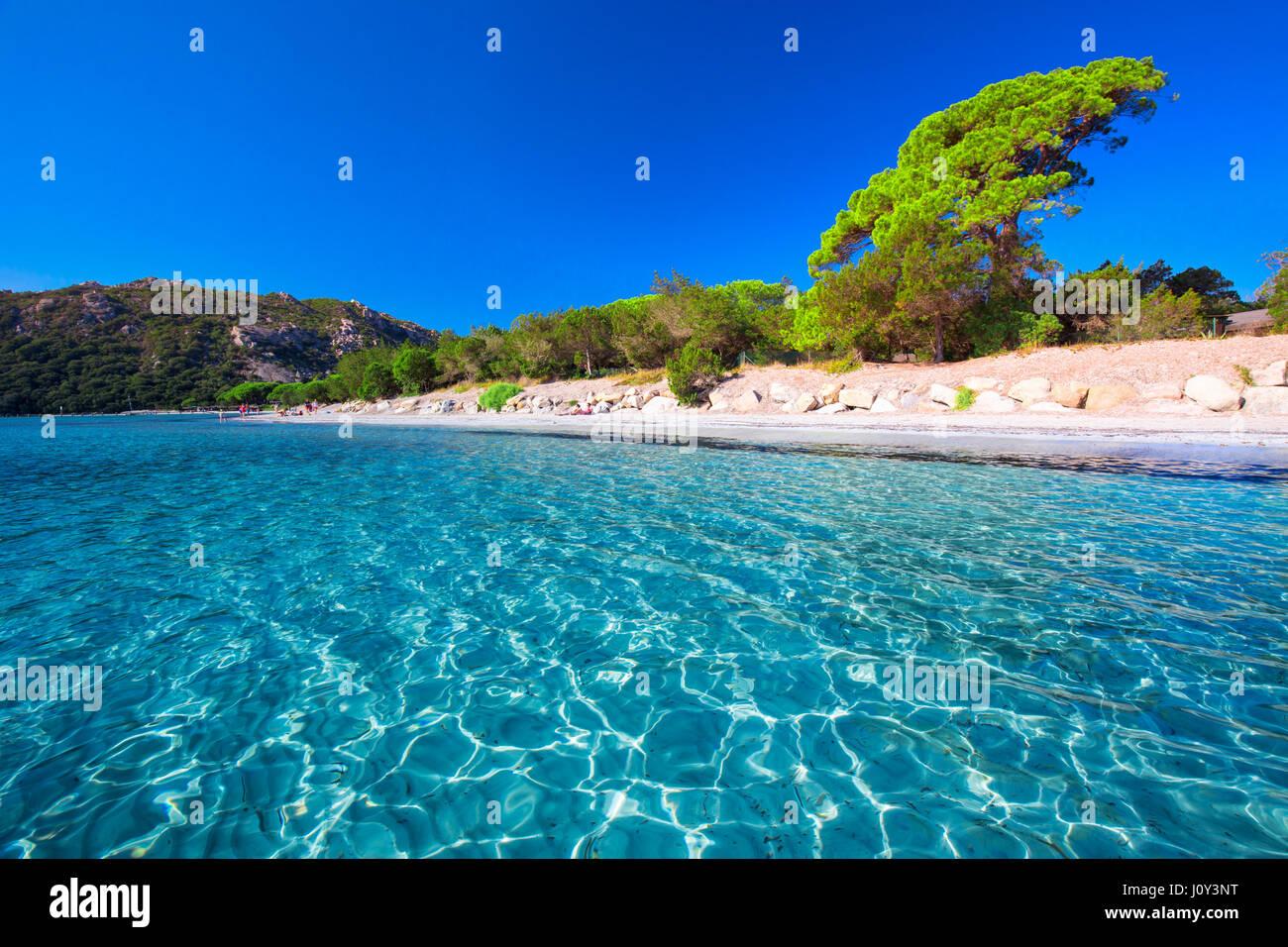 Santa Giulia sandigen Strand mit Pinien und Azure klare Wasser, Korsika, Frankreich, Europa Stockbild