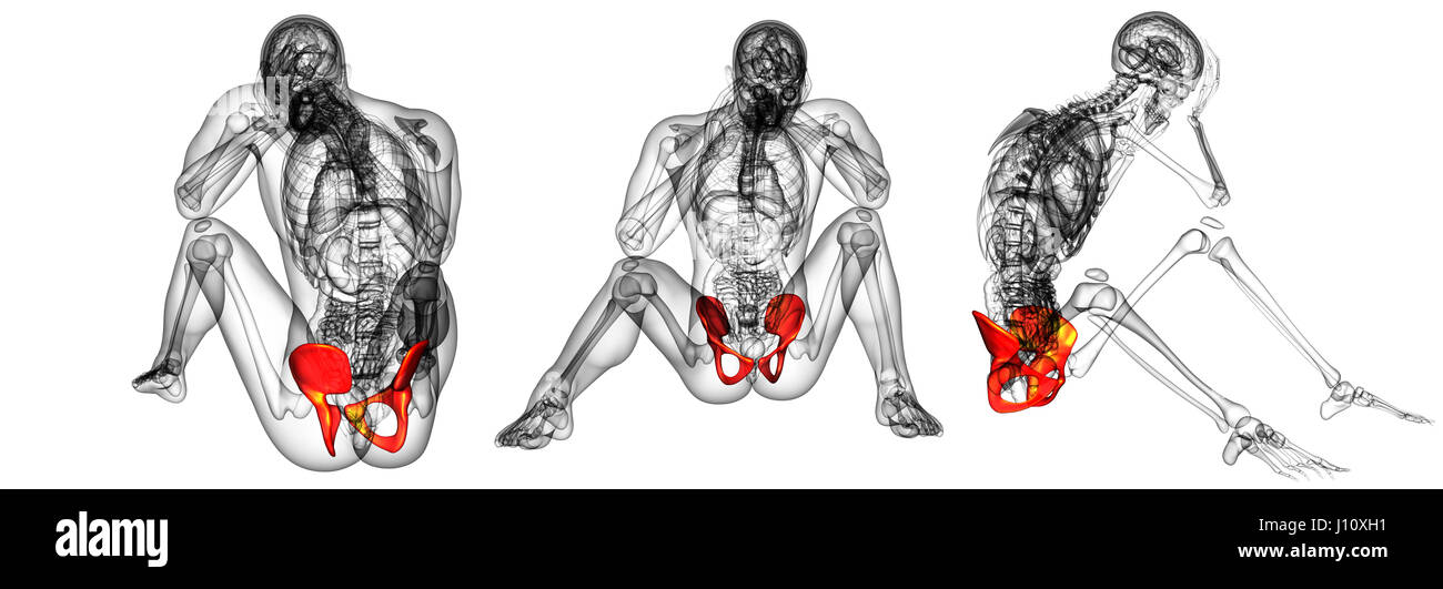 3d Rendering Medical Illustration Pelvis Stockfotos & 3d Rendering ...