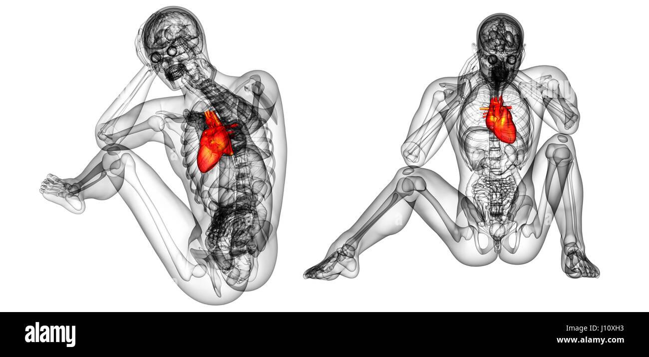Tolle 3d Anatomie Des Herzens Bilder - Anatomie Ideen - finotti.info
