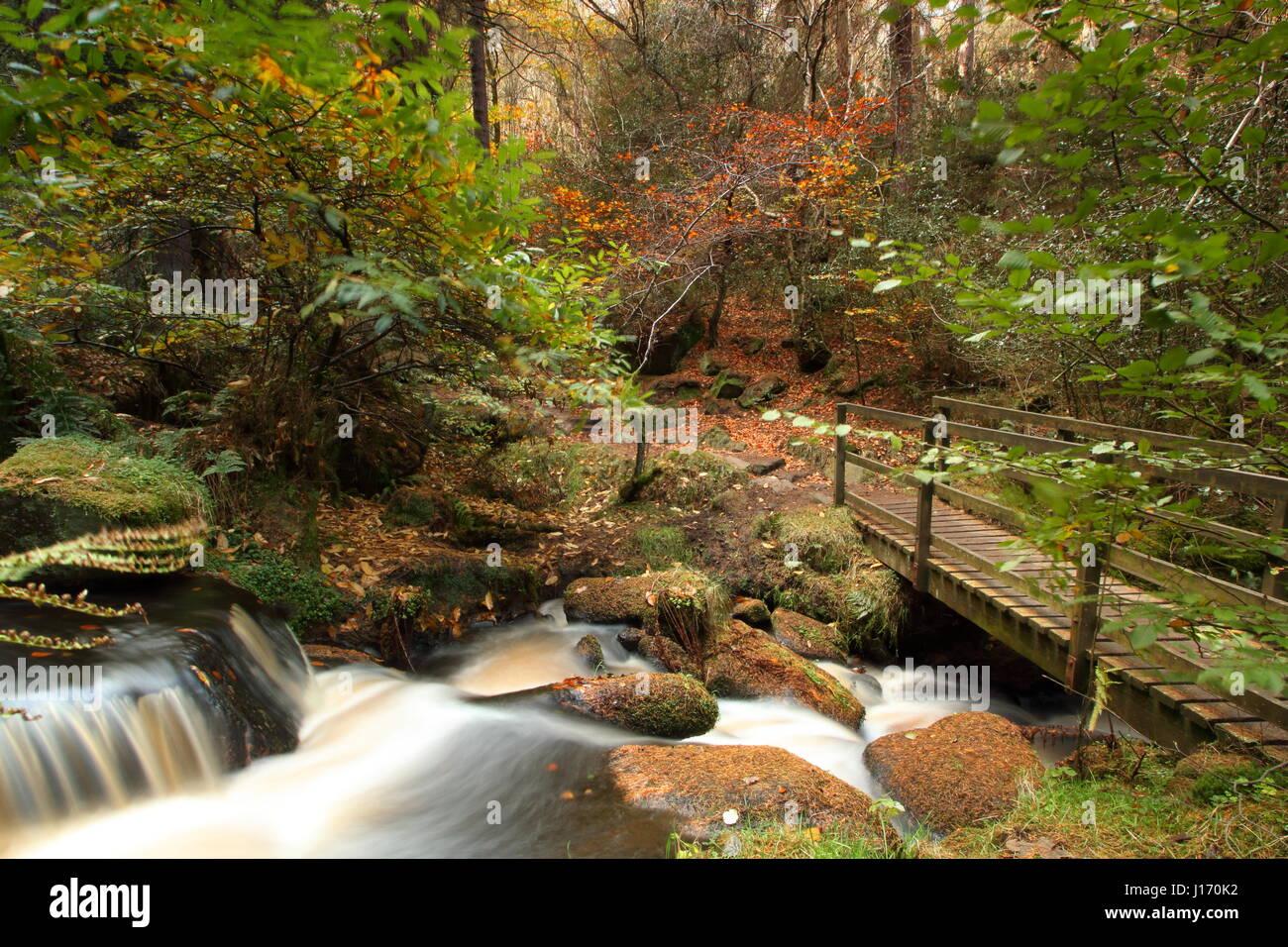 Atemberaubende Herbstlaub im Wald im malerischen Wyming Brook Nature Reserve in Sheffield Stadt Peak District, England Stockbild