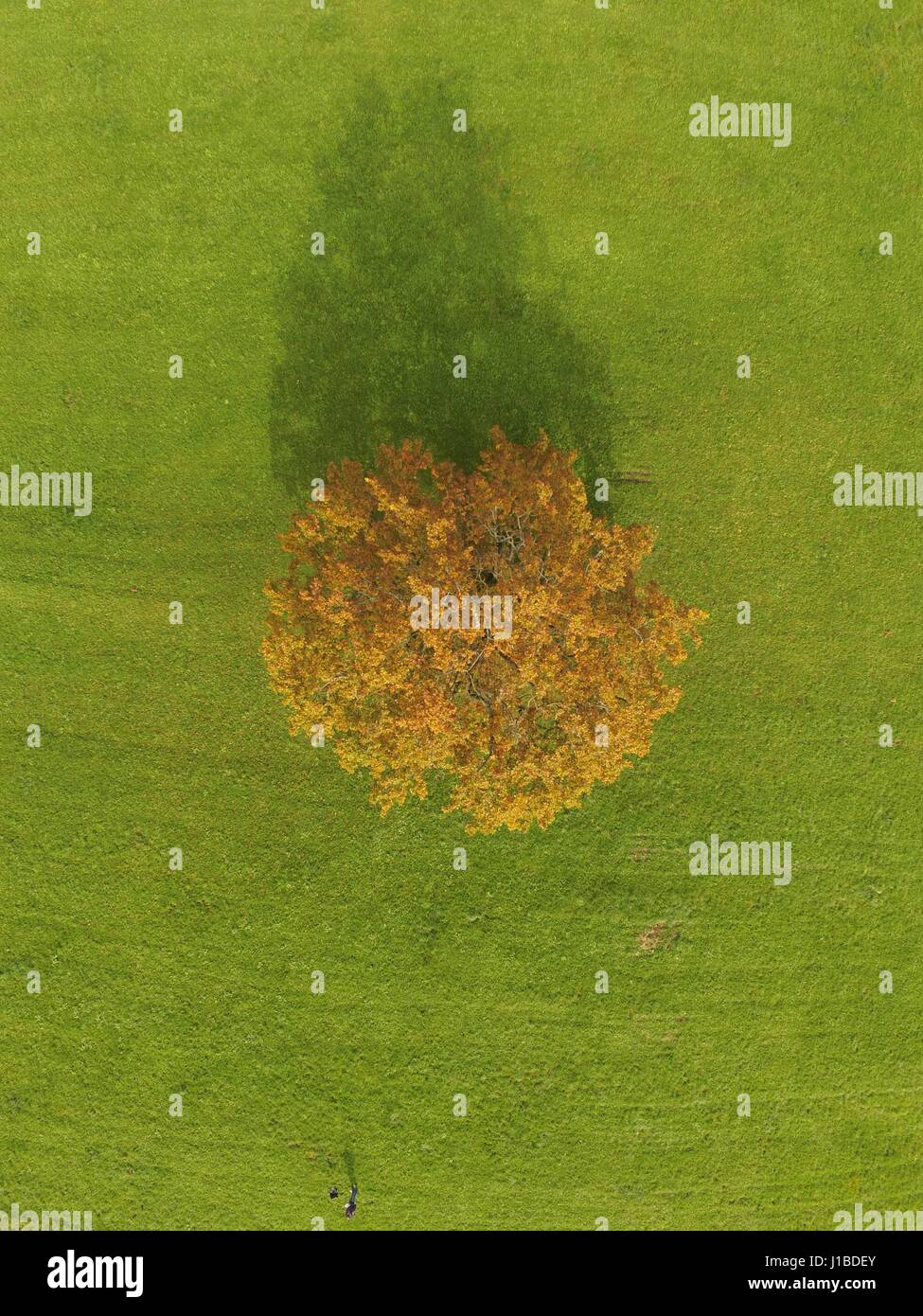 Baum im Herbst-Baum Im Herbst Stockbild