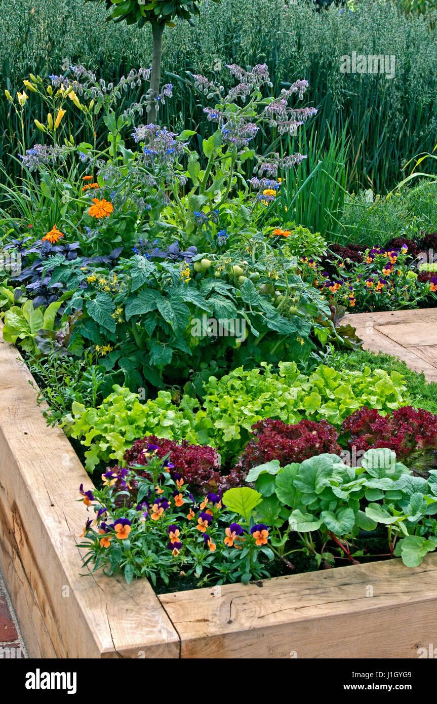 Hochbeet In Einer Zuteilung Mit Gemuse Bepflanzt Stockfoto Bild