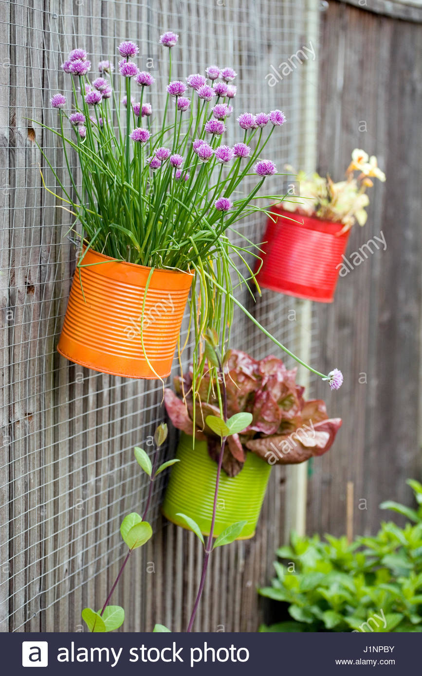 Essbare Pflanzen In Bunten Dosen An Der Wand Der Kinder S Garten