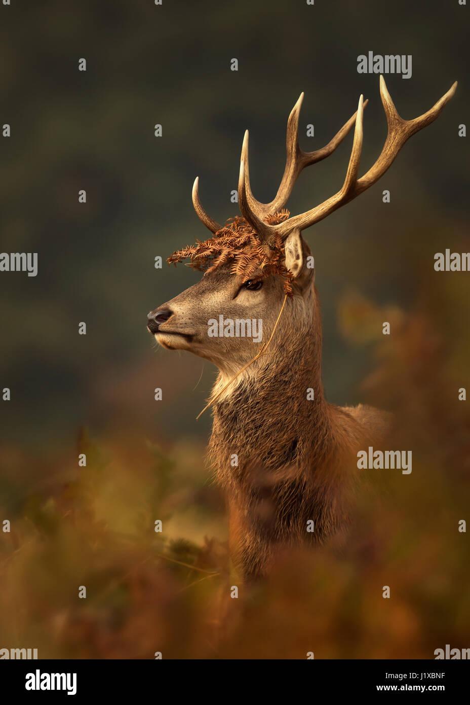 Porträt des Rotwildes mit einer Krone von Farnen Stockbild