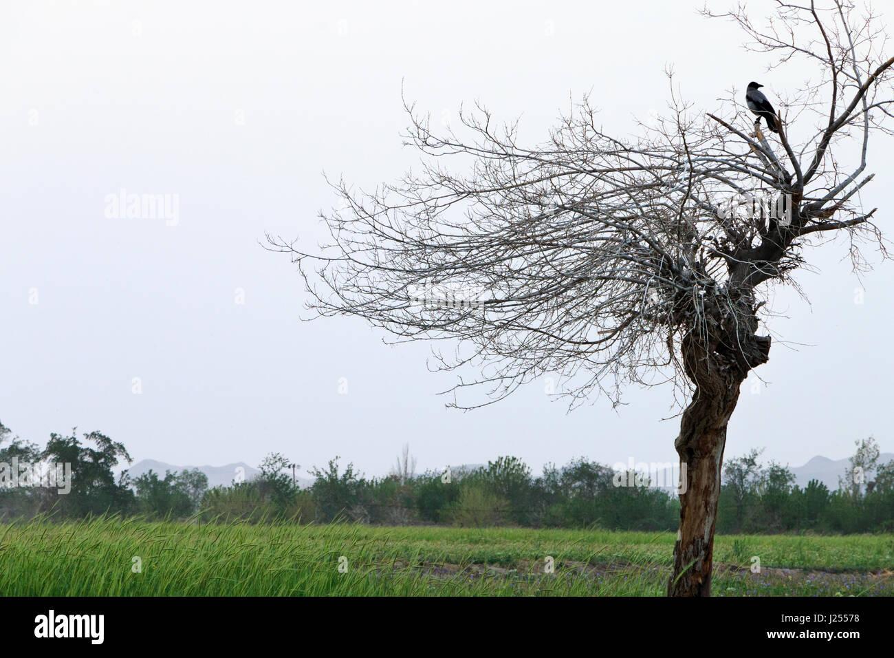 Eine Krähe thront auf der Spitze eines Baumes Stockbild