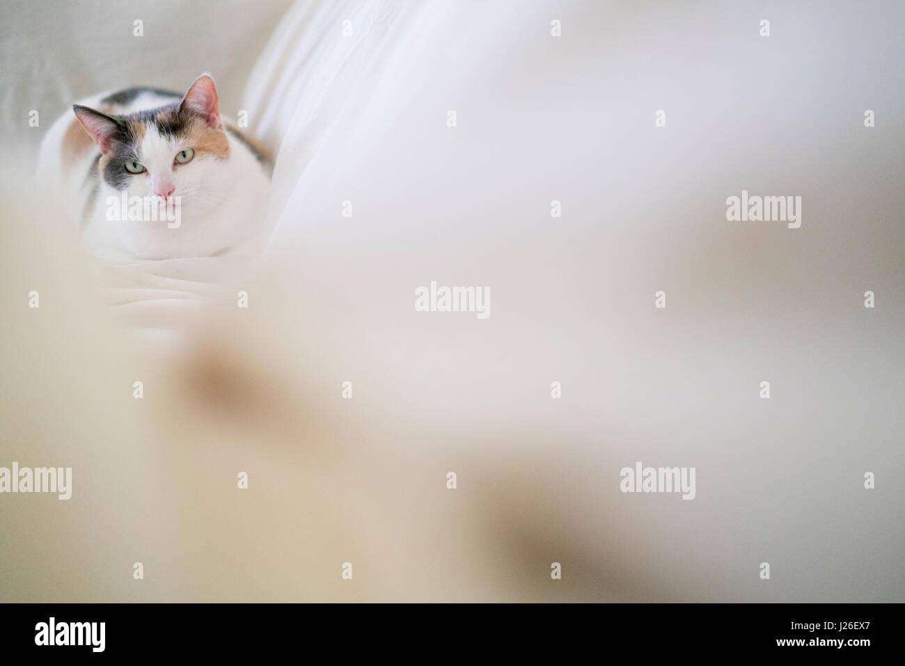 Eine leichte Glückskatze ruht auf einem weißen Blatt in weiches Licht. Stockbild